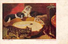 top006889 - Cat Post Card, Cats Postcards