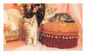 top006893 - Cat Post Card, Cats Postcards