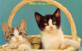 top006895 - Cat Post Card, Cats Postcards