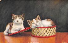 top006901 - Cat Post Card, Cats Postcards
