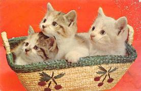 top006917 - Cat Post Card, Cats Postcards
