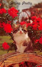 top006925 - Cat Post Card, Cats Postcards
