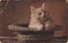 top006937 - Cat Post Card, Cats Postcards