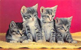 top006939 - Cat Post Card, Cats Postcards