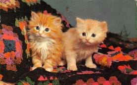 top006941 - Cat Post Card, Cats Postcards