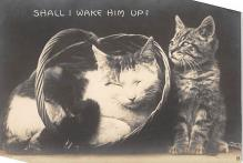 top006947 - Cat Post Card, Cats Postcards