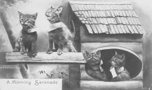 top006965 - Cat Post Card, Cats Postcards