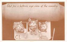 top006981 - Cat Post Card, Cats Postcards