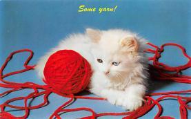 top006987 - Cat Post Card, Cats Postcards