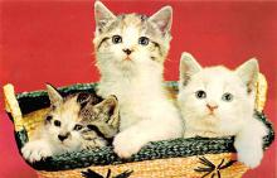 top006991 - Cat Post Card, Cats Postcards