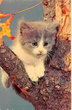 top006997 - Cat Post Card, Cats Postcards