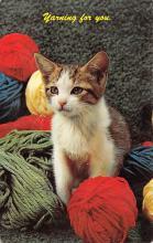 top007015 - Cat Post Card, Cats Postcards