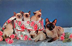 top007021 - Cat Post Card, Cats Postcards