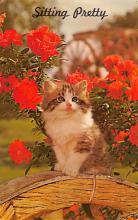 top007027 - Cat Post Card, Cats Postcards