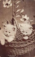top007043 - Cat Post Card, Cats Postcards