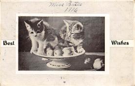 top007049 - Cat Post Card, Cats Postcards