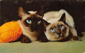 top007051 - Cat Post Card, Cats Postcards