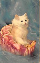 top007055 - Cat Post Card, Cats Postcards