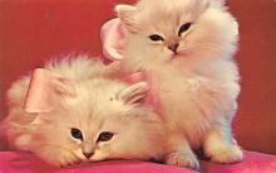 top007057 - Cat Post Card, Cats Postcards