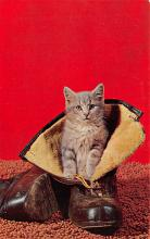 top007059 - Cat Post Card, Cats Postcards