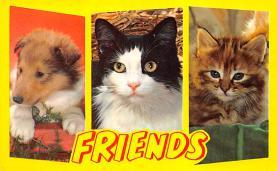 top007061 - Cat Post Card, Cats Postcards