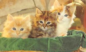 top007063 - Cat Post Card, Cats Postcards
