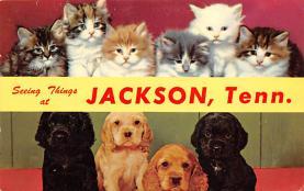 top007065 - Cat Post Card, Cats Postcards