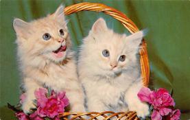 top007071 - Cat Post Card, Cats Postcards