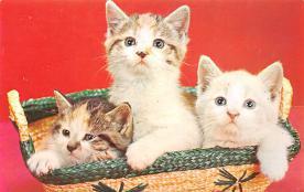 top007077 - Cat Post Card, Cats Postcards