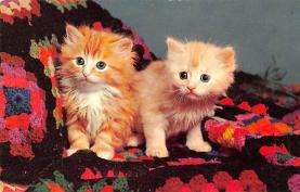 top007085 - Cat Post Card, Cats Postcards
