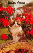 top007087 - Cat Post Card, Cats Postcards