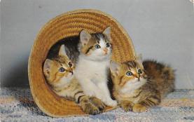 top007089 - Cat Post Card, Cats Postcards