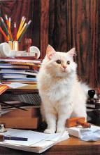 top007095 - Cat Post Card, Cats Postcards