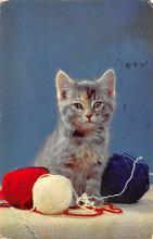 top007097 - Cat Post Card, Cats Postcards