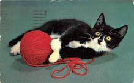 top007099 - Cat Post Card, Cats Postcards