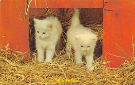 top007101 - Cat Post Card, Cats Postcards