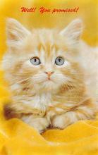 top007103 - Cat Post Card, Cats Postcards