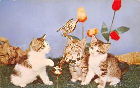 top007107 - Cat Post Card, Cats Postcards