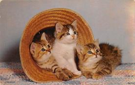 top007109 - Cat Post Card, Cats Postcards