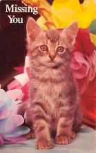 top007117 - Cat Post Card, Cats Postcards