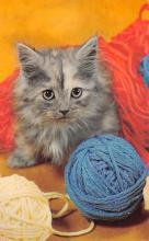 top007131 - Cat Post Card, Cats Postcards