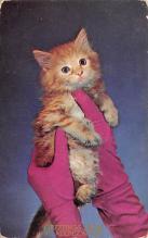 top007139 - Cat Post Card, Cats Postcards