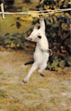 top007145 - Cat Post Card, Cats Postcards