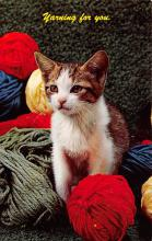 top007151 - Cat Post Card, Cats Postcards
