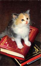 top007153 - Cat Post Card, Cats Postcards