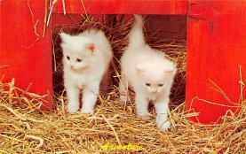 top007155 - Cat Post Card, Cats Postcards