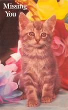 top007169 - Cat Post Card, Cats Postcards