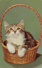 top007171 - Cat Post Card, Cats Postcards