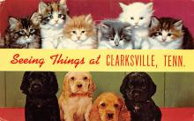 top007173 - Cat Post Card, Cats Postcards
