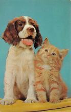 top007177 - Cat Post Card, Cats Postcards